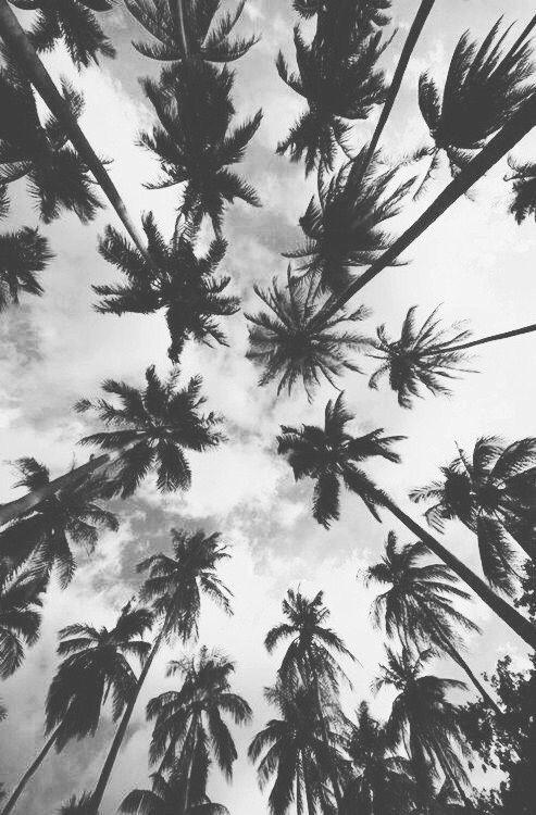 Eb3ec8809f34165617a705cbe59657cb Black Wallpaper Iphone Palm Trees